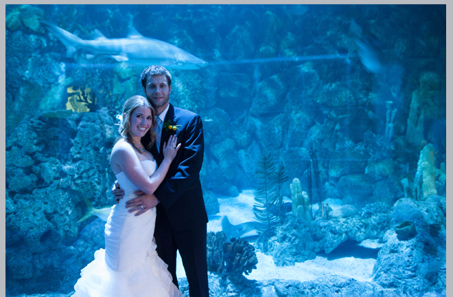 Vibrant Whimsical Aquarium Wedding By Rsvp Studios