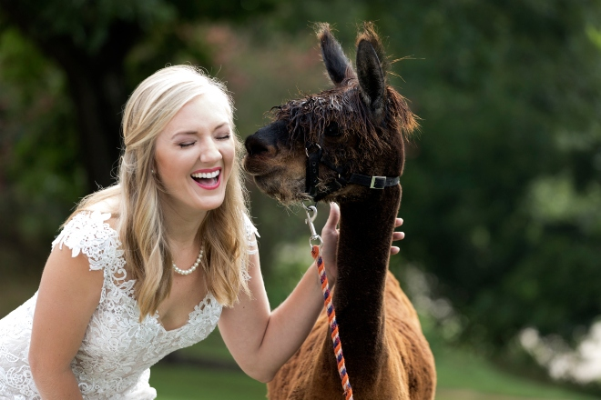 hill country weddings austin texas hyatt regency lost pines bride llama country rustic elegant