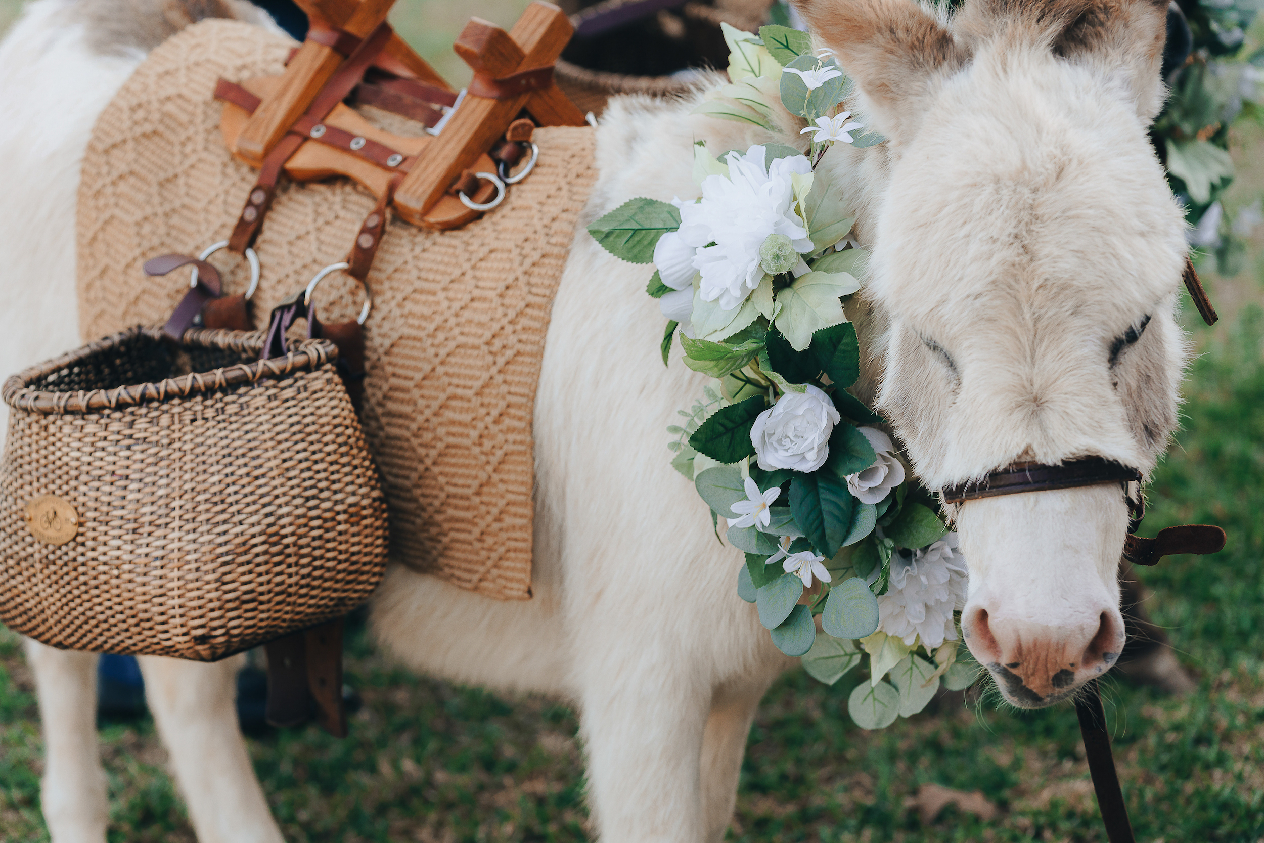 Donkey with pannier baskets and a white and green floral wreath around its neck.