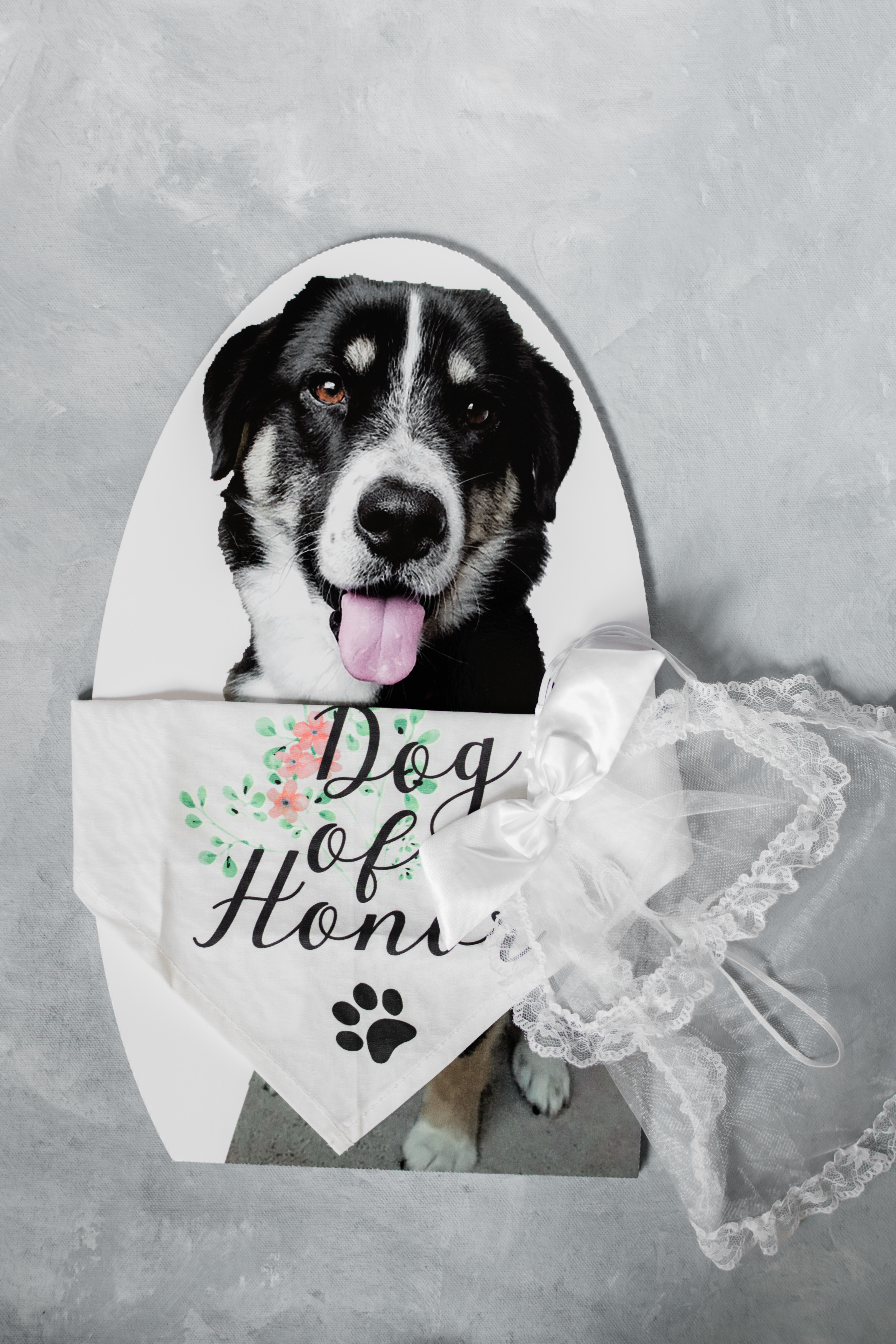 """A photo of the bride and groom's dog with a bandana that says """"Dog of Honor"""""""