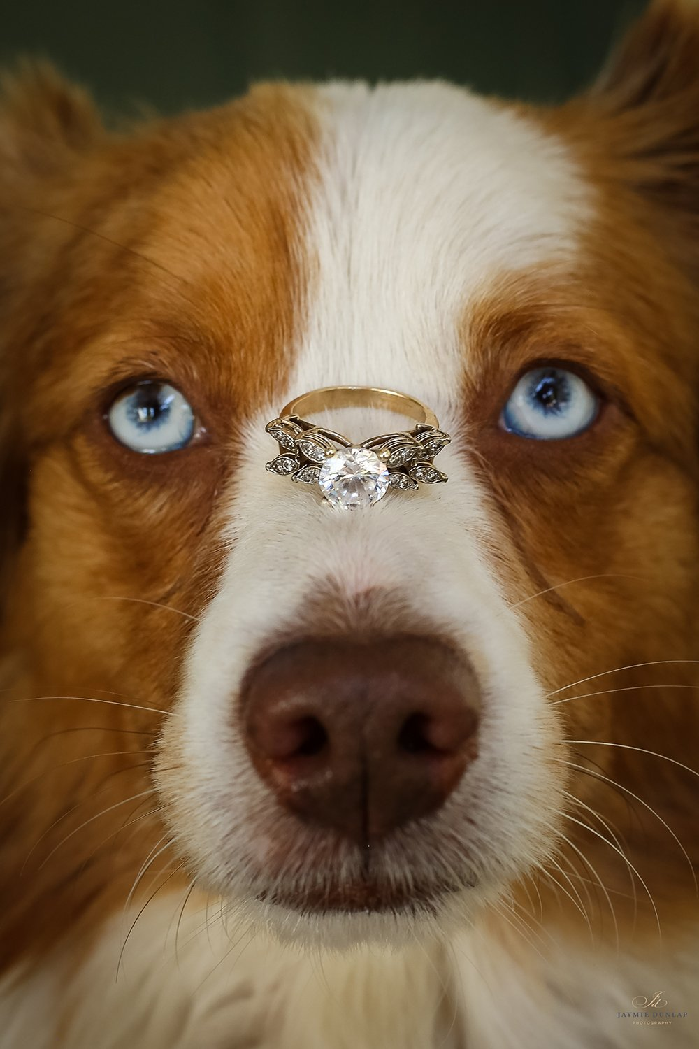 wedding photography - dog