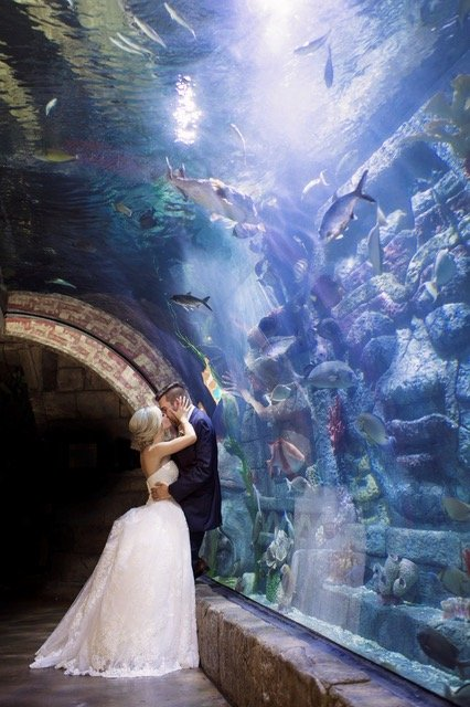Rehearsal Dinner + Wedding Event Space in Houston – Downtown Aquarium