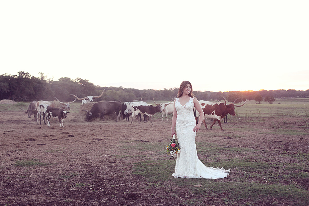 longhorn ranch - outdoor wedding photography
